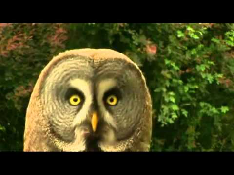 Dramatic Animals – Inception