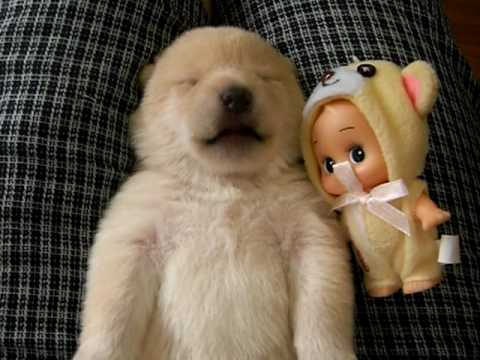 Aww Of The Day: Puppy With Fluffy Toy Making Cute Sounds